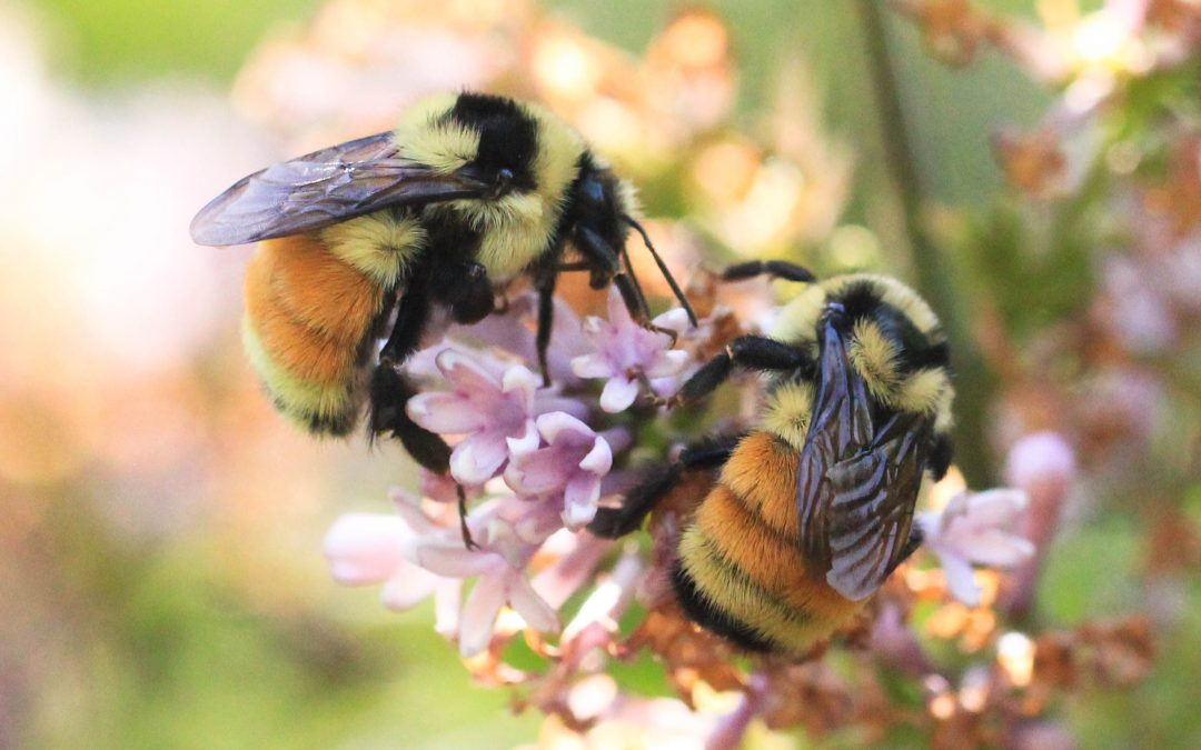 Bees and RVs