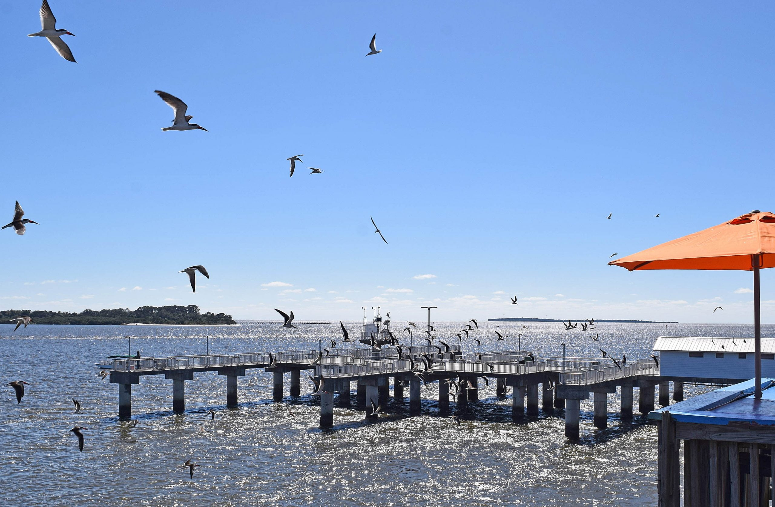 The Gulf of Mexico with birds flying