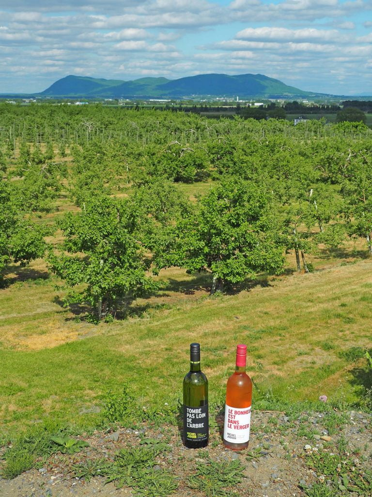 Two wine bottles looking over the apple orchard