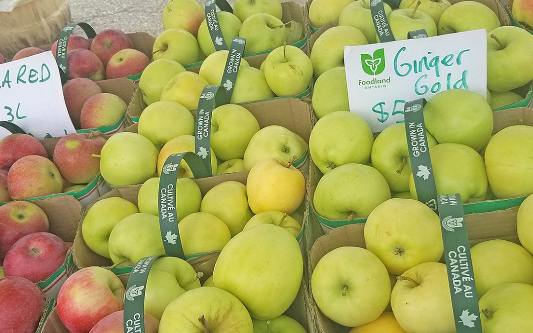 Eh is for Apples Grown in Canada!