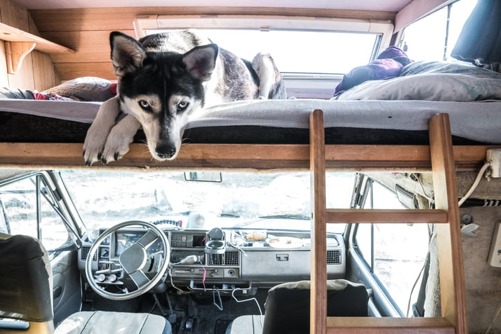 How to Successfully RV with Your Pet