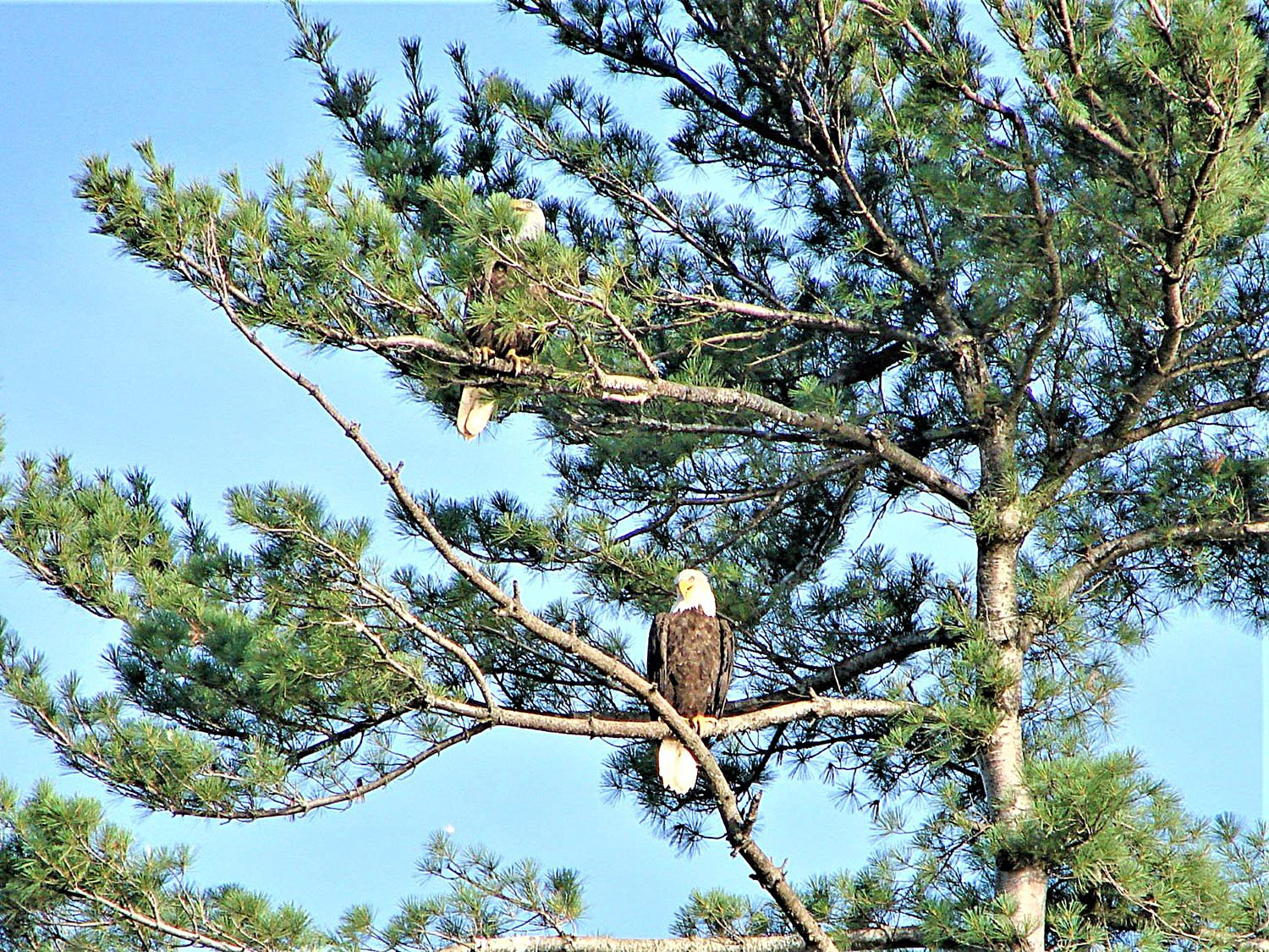Where, When and How to Camp with Bald Eagles in Canada