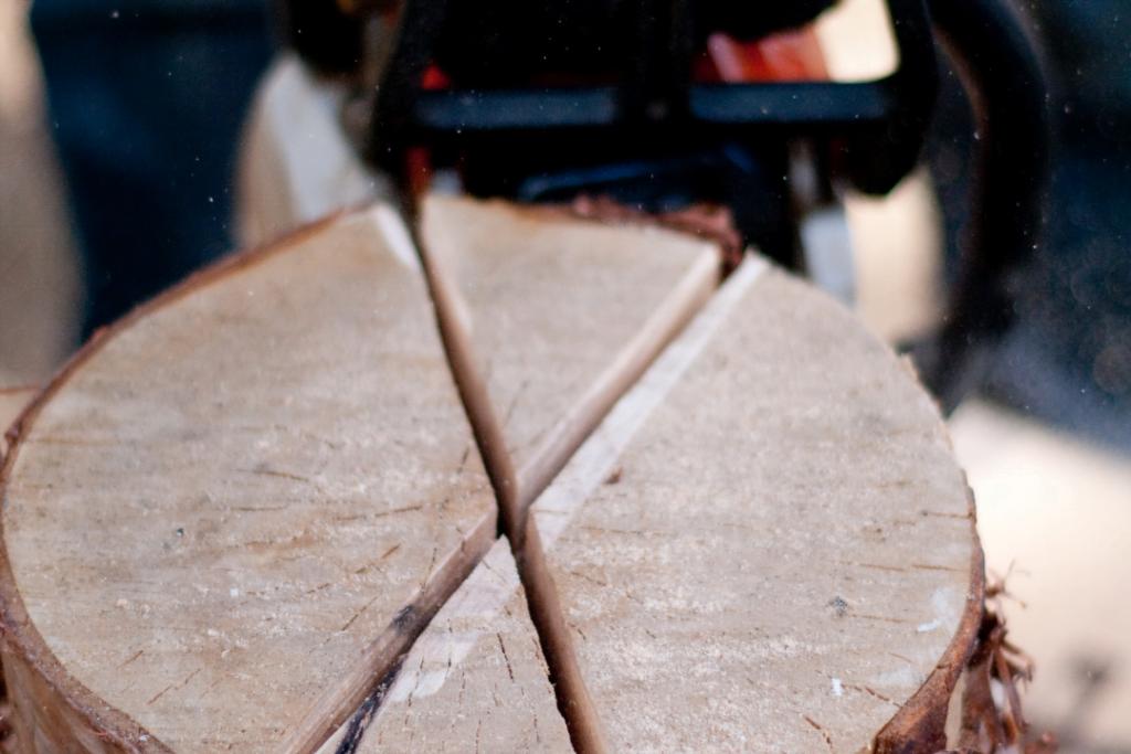 Three cuts in a birch log